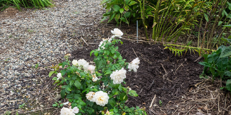 How to Run Sprinklers to Guard Fruit Trees